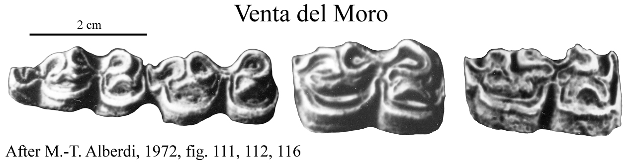 Venta Moro del Moro, Lower cheek teeth