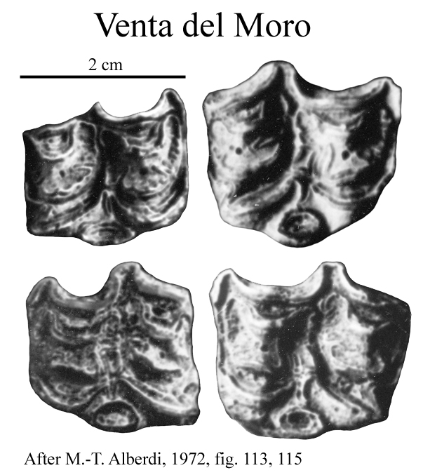 Venta Moro del Moro, Upper cheek teeth