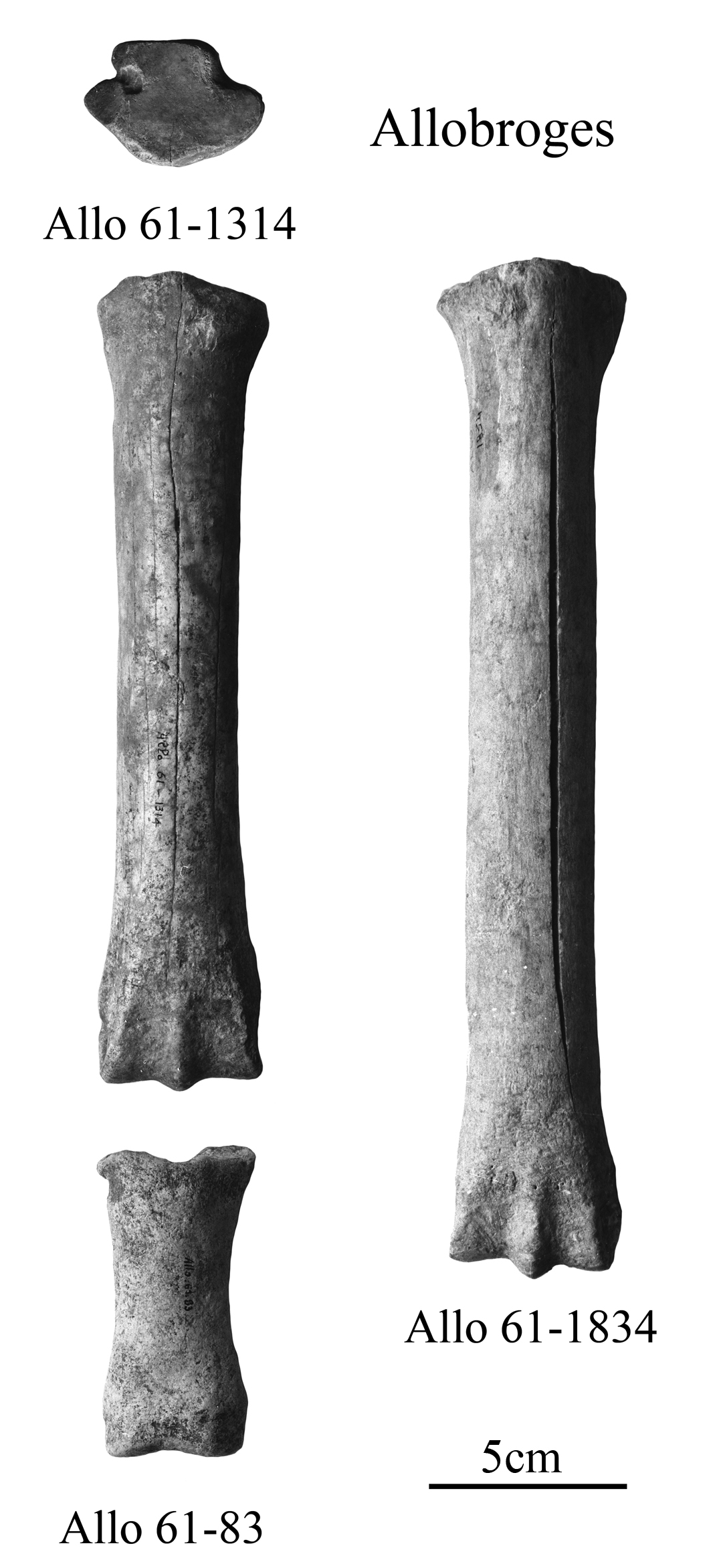 Equus melkiensis and E. aff. melkiensis, Limb bones, Allobroges