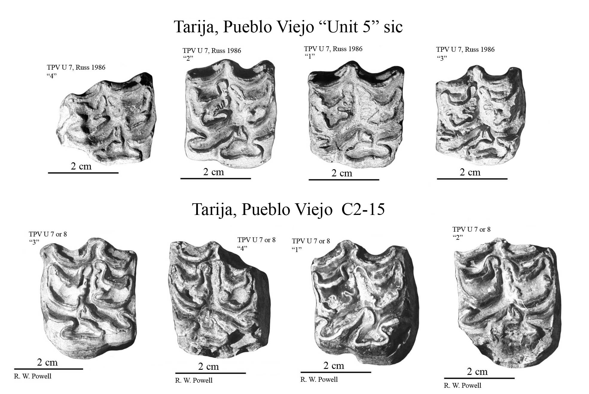 Pueblo Viejo Upper cheek teeth photos